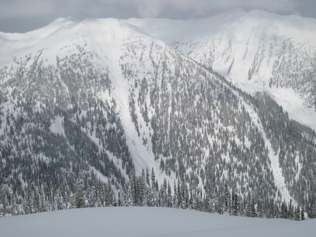Incredible tree skiing, CMH Monashees